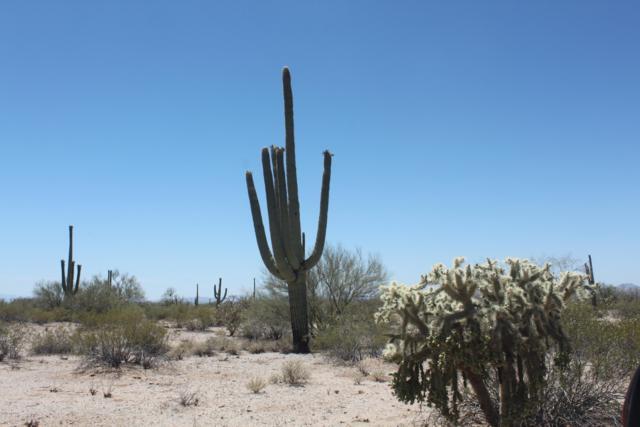 TBD N Wild Hardt Way, Marana, AZ 85658 (#21832855) :: RJ Homes Team