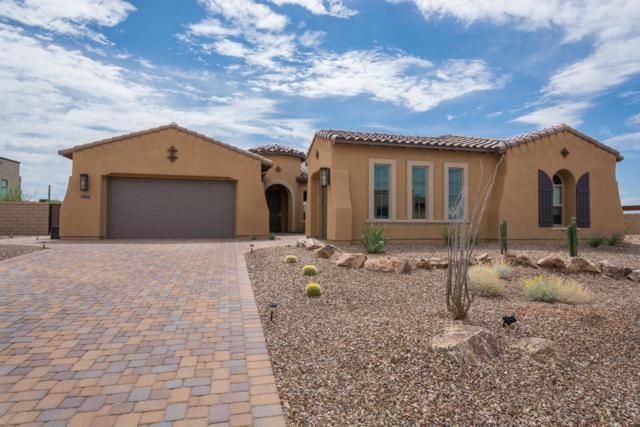 14010 N Speckled Burro Lane, Marana, AZ 85658 (#21900926) :: Long Realty Company
