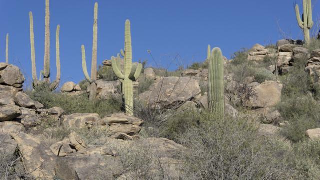 14442 N Phinny Rock Place #46, Marana, AZ 85658 (#21914028) :: Long Realty Company