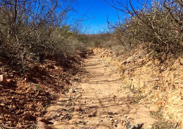 E Geronimo Trail, Douglas, AZ 85607 (#21924835) :: Long Realty - The Vallee Gold Team