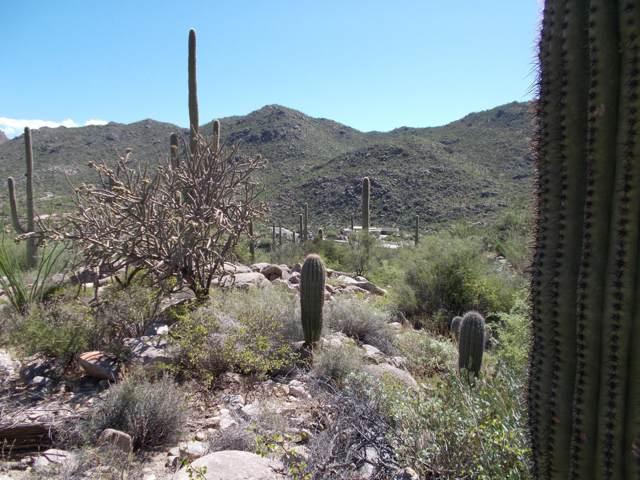 4255 W Cush Canyon Loop #116, Marana, AZ 85658 (#21926000) :: Luxury Group - Realty Executives Tucson Elite