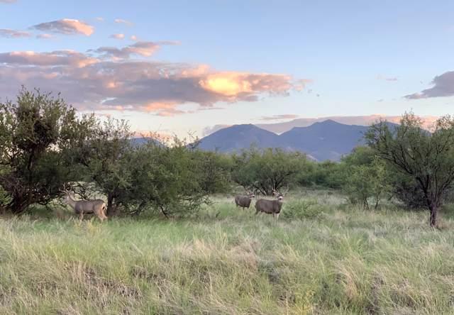 W Thunder Pass Road #60, Benson, AZ 85602 (MLS #21926062) :: The Property Partners at eXp Realty