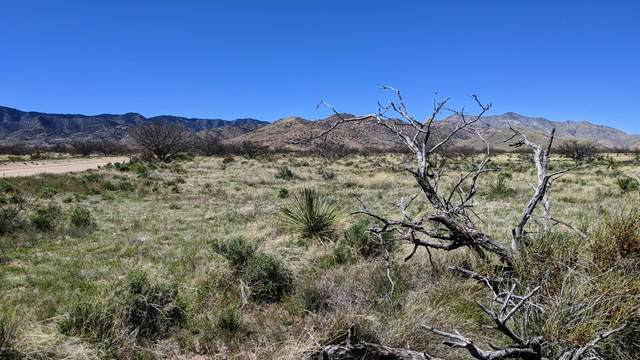 1.28 Acre On Pearce Road #19, Pearce, AZ 85625 (#22010789) :: The Local Real Estate Group   Realty Executives