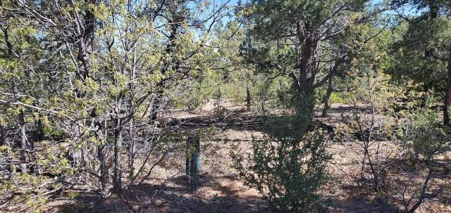 4480 W Shaggybark Road #169, Show Low, AZ 85901 (#22012238) :: Long Realty - The Vallee Gold Team