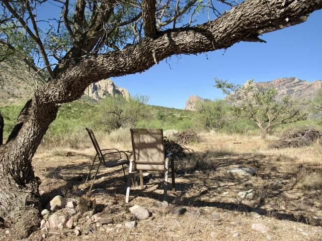 4 Acres S Hatari Ln & Portal Rd, Portal, AZ 85632 (MLS #22015641) :: The Property Partners at eXp Realty