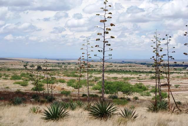Pinery Canyon Road N/A, Willcox, AZ 85643 (#22026377) :: Gateway Partners
