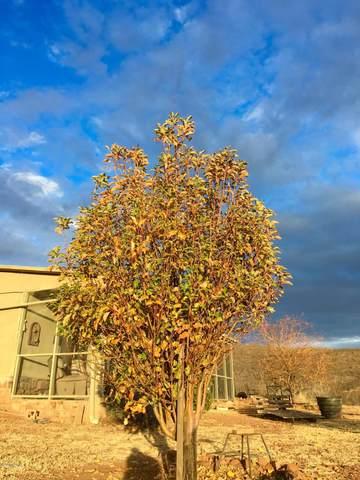 3837 S Yoruba Basin Trail, Tombstone, AZ 85638 (#22029344) :: Tucson Property Executives