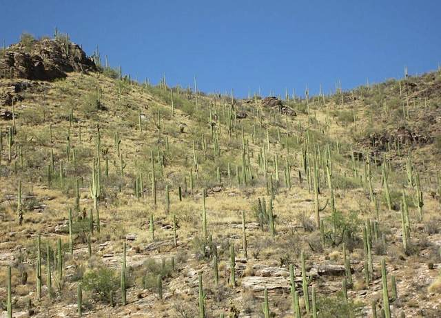 7600 N Camino Sin Vacas #228, Tucson, AZ 85718 (#22112691) :: AZ Power Team