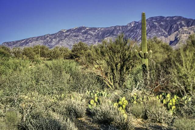 1854 W Tangerine Road, Oro Valley, AZ 85755 (#22116322) :: Gateway Partners International