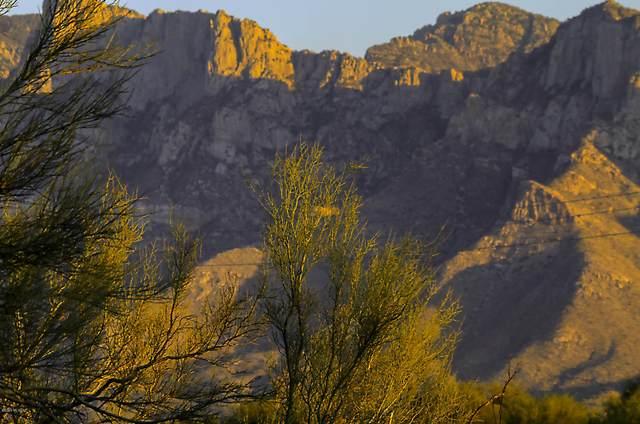 1800 W Tangerine Road, Oro Valley, AZ 85755 (#22121089) :: Elite Home Advisors | Keller Williams