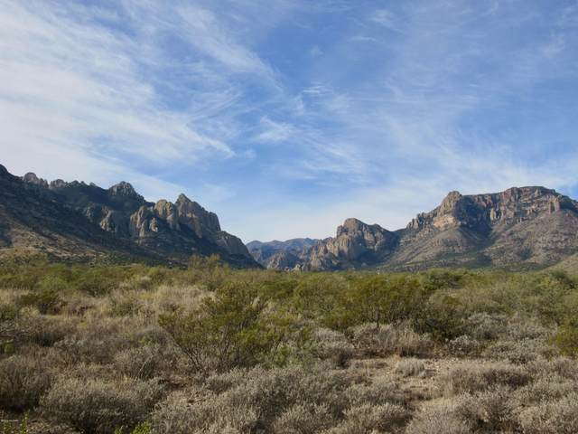 23 Acres S Foothills Road, Portal, AZ 85632 (MLS #22025869) :: My Home Group