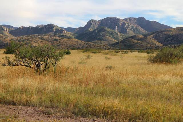 Pinery Canyon Road A, Willcox, AZ 85643 (MLS #22029102) :: My Home Group