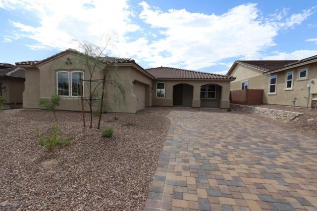 14159 N Golden Barrel Pass W, Marana, AZ 85658 (#21810117) :: Long Realty Company