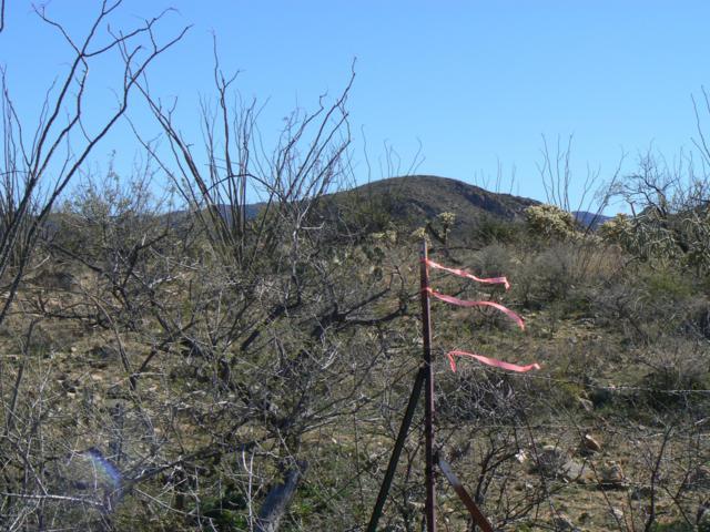 16880 S Garvey Road, Tucson, AZ 85736 (#21903981) :: Long Realty Company