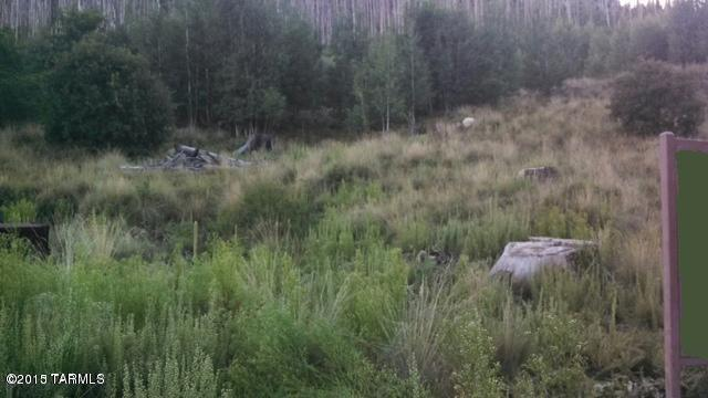 TBD Carter Canyon Road #4, Mt. Lemmon, AZ 85619 (#21715748) :: My Home Group - Tucson