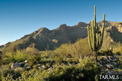 2191 E Desert Garden Drive #1, Tucson, AZ 85718 (#21802269) :: Keller Williams