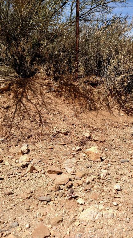 Crested Saguaro, Marana, AZ 85658 (#21817205) :: The KMS Team