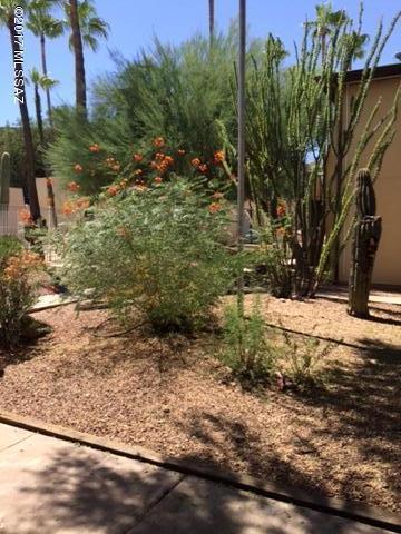1620 N Wilmot Road E150, Tucson, AZ 85712 (#21832501) :: The Josh Berkley Team