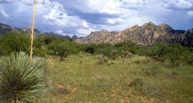 N Cougar Trail #95, St. David, AZ 85630 (#22108245) :: Long Realty Company