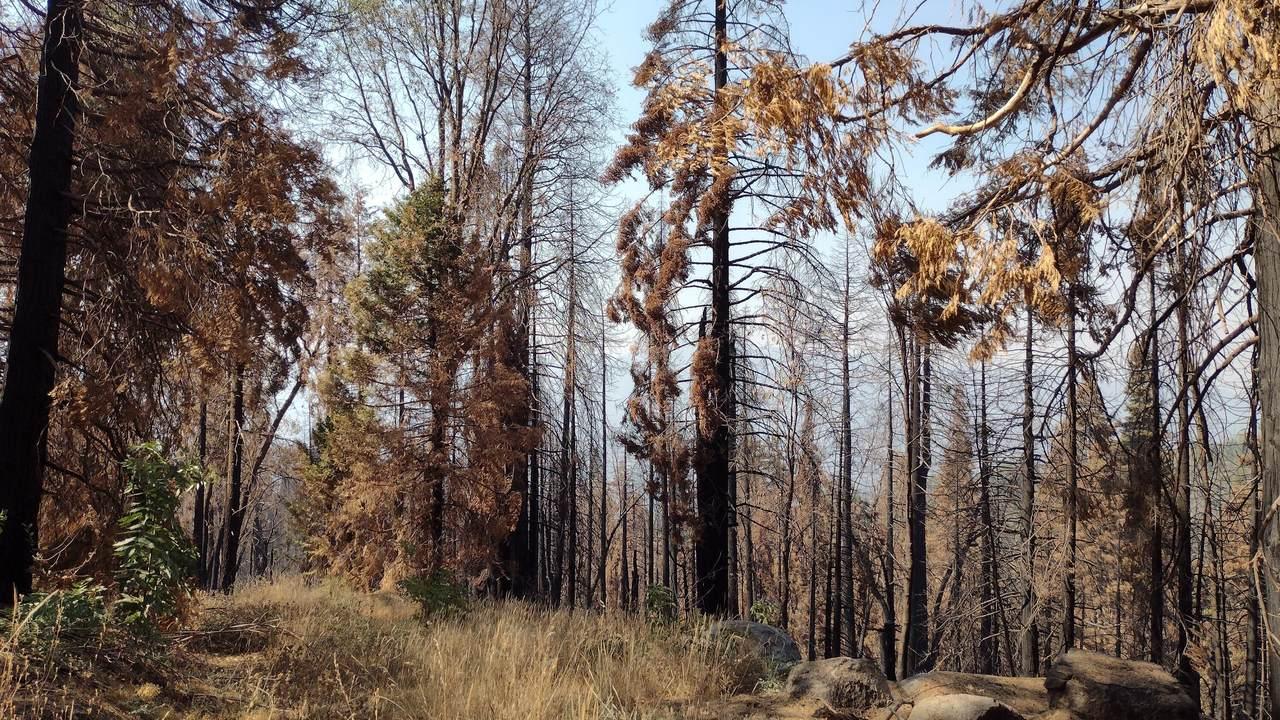 00 Redwood Drive - Photo 1