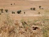 0 Crows Nest,Brianna Off Ryan - Photo 35