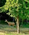 43429 Sierra Drive - Photo 5
