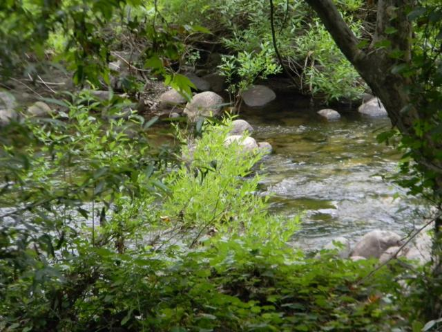 0 S.Fork Drive, Three Rivers, CA 93271 (#139150) :: The Jillian Bos Team