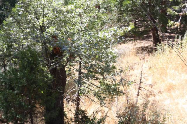 0 Highway 190, Camp Nelson, CA 93208 (#204832) :: Martinez Team