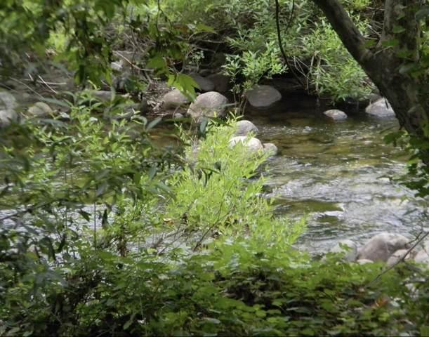 S Fork Dr, Three Rivers, CA 93271 (#211848) :: Martinez Team