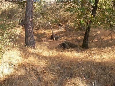 Manter Meadow Road, Pine Flat, CA 93207 (#206429) :: The Jillian Bos Team