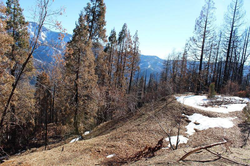 Redwood Drive - Photo 1