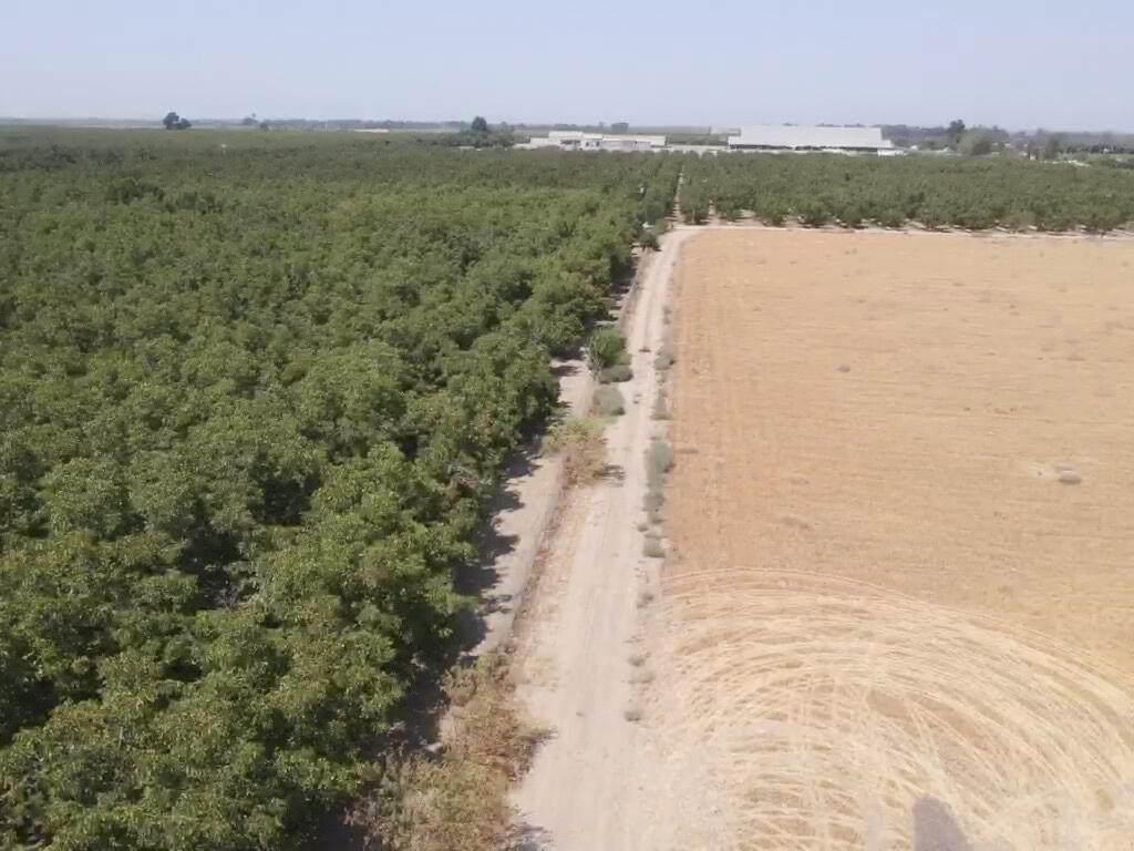 Avenue 322 10 Acres Walnuts - Photo 1