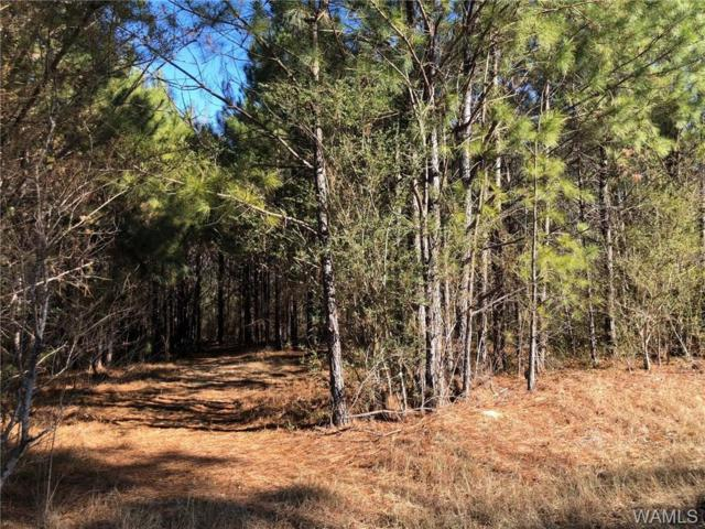 Lot 14 Clear Lake Drive, NORTHPORT, AL 35475 (MLS #127504) :: The Gray Group at Keller Williams Realty Tuscaloosa