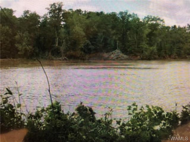 10 Black Warrior Bay, AKRON, AL 36776 (MLS #130327) :: Wes York Team