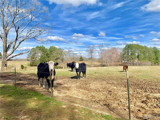 1268 County Road 9, VERNON, AL 35592 (MLS #137006) :: The Advantage Realty Group