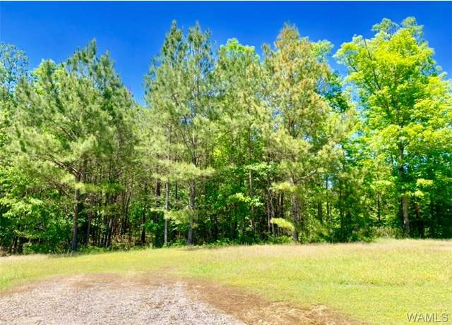 0 Stoney Point Rd Road, Double Springs, AL 35504 (MLS #138288) :: The Alice Maxwell Team