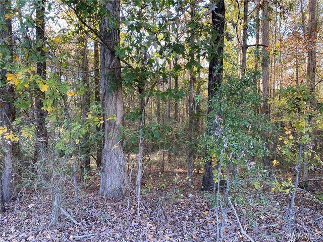 000 Hwy 69 N, NORTHPORT, AL 35473 (MLS #141276) :: Caitlin Tubbs with Hamner Real Estate