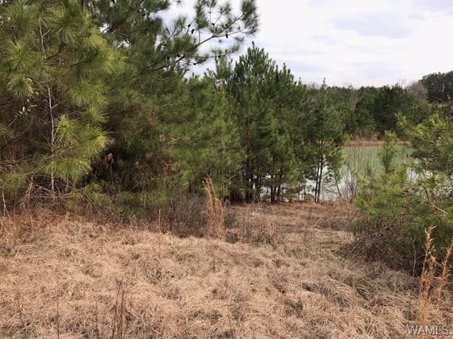00 Dunn Creek Road, GORDO, AL 35466 (MLS #126619) :: Williamson Realty Group