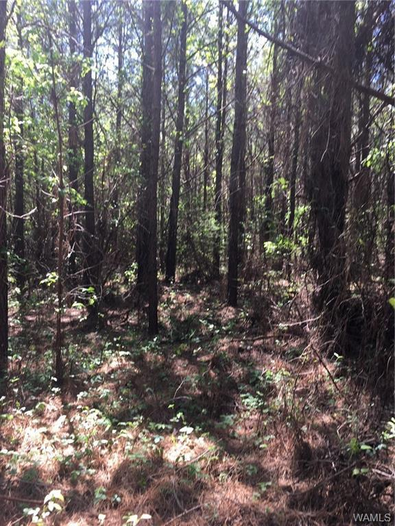 00 Greene County Rd 208, EUTAW, AL 35462 (MLS #126826) :: The Advantage Realty Group