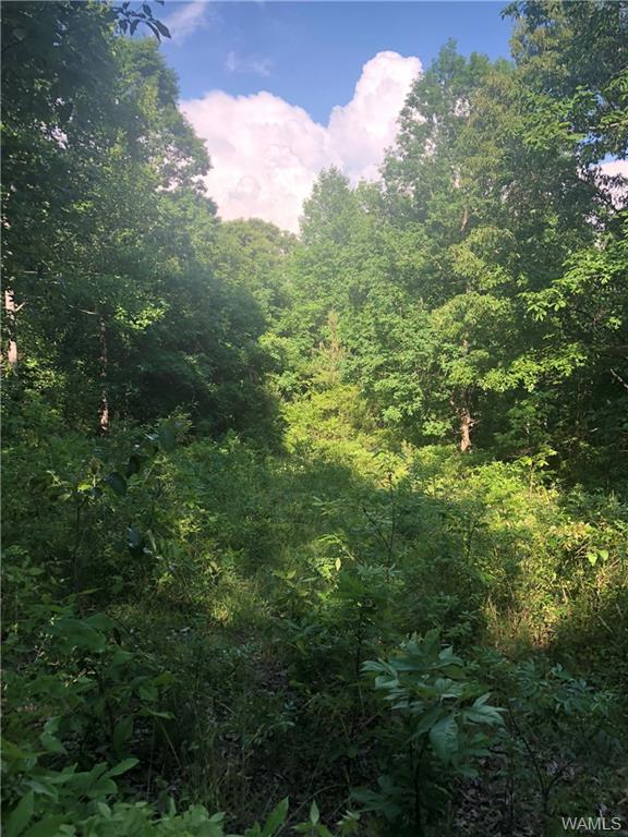0 Highway 159, FAYETTE, AL 35555 (MLS #127204) :: The Advantage Realty Group
