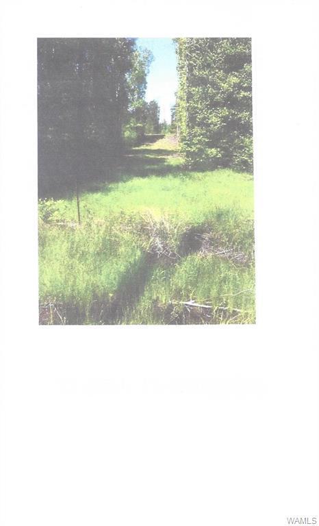 2909 Active Road, LAWLEY, AL 36793 (MLS #132193) :: The Gray Group at Keller Williams Realty Tuscaloosa