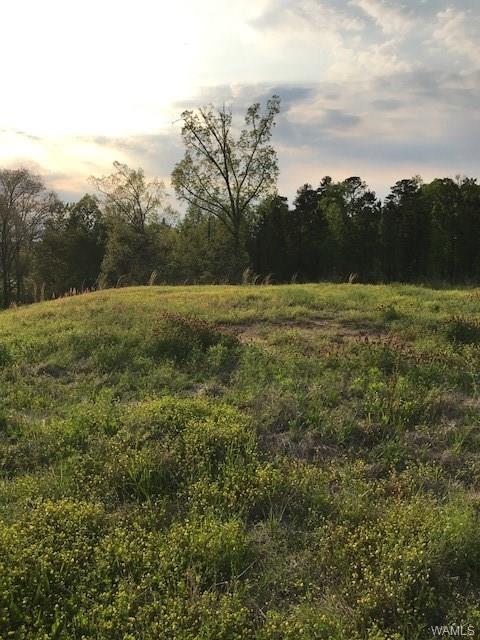 12972 Rolling Meadows Circle #185, NORTHPORT, AL 35473 (MLS #132734) :: The Gray Group at Keller Williams Realty Tuscaloosa