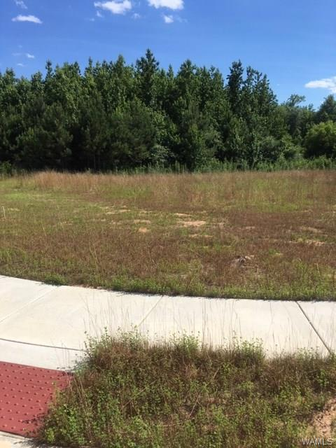 Lot 314 Sawtooth Lane, NORTHPORT, AL 35475 (MLS #133625) :: Hamner Real Estate