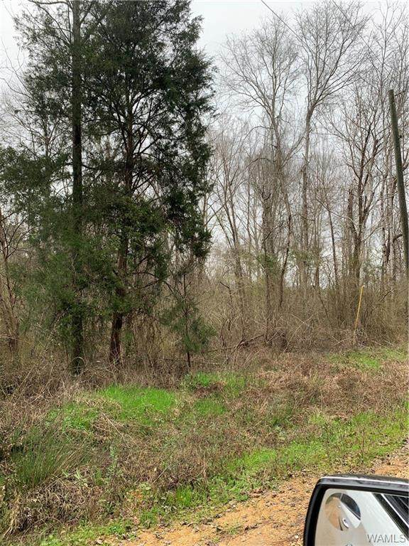 589 Tim Gates Road, PICKENSVILLE, AL 35447 (MLS #136986) :: The Alice Maxwell Team