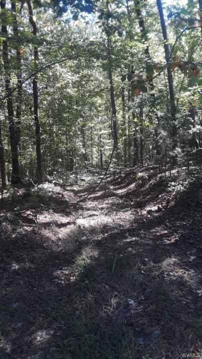000 Martin Road Spur, NORTHPORT, AL 35473 (MLS #140636) :: The Advantage Realty Group