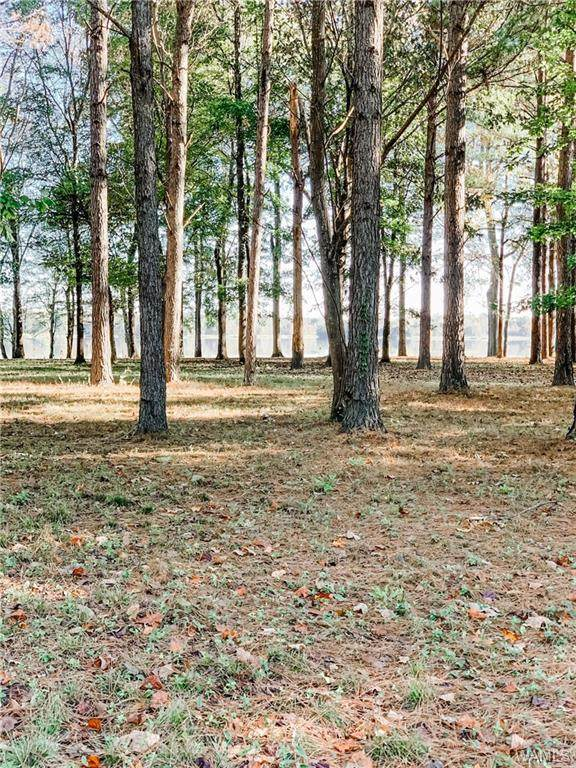 48 Cypress Point Lane, SAWYERVILLE, AL 35441 (MLS #141080) :: The Advantage Realty Group