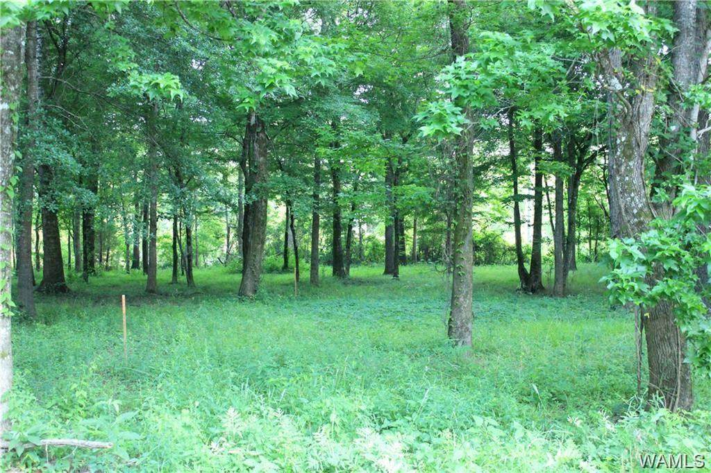 LOT 1 Black Warrior Bay - Photo 1