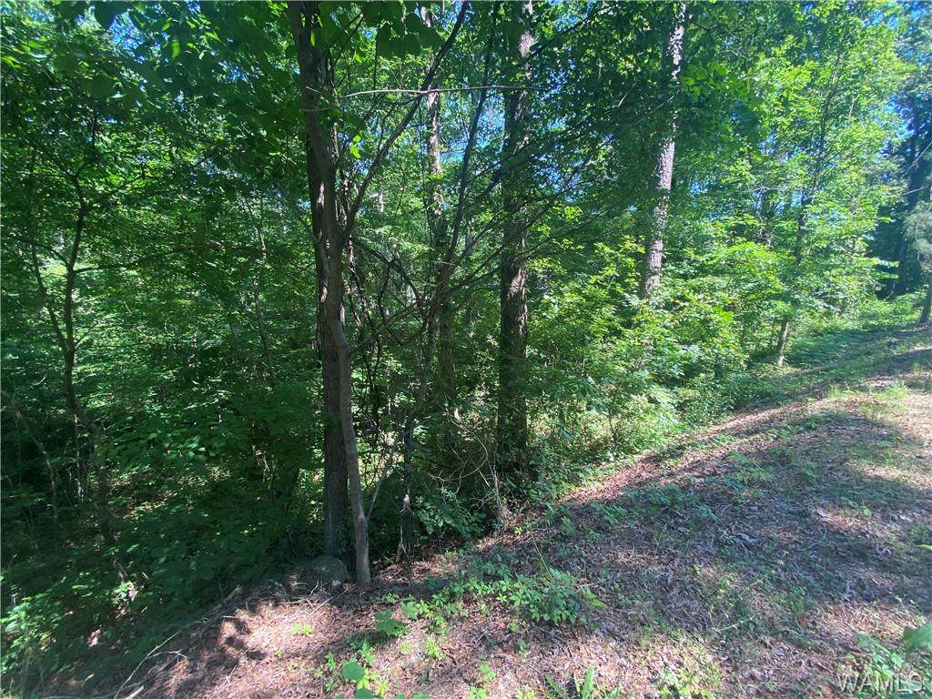 0 Cottonwood Drive - Photo 1