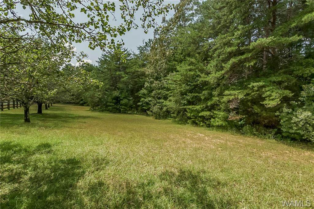 Lot 5 Old Watermelon Road - Photo 1