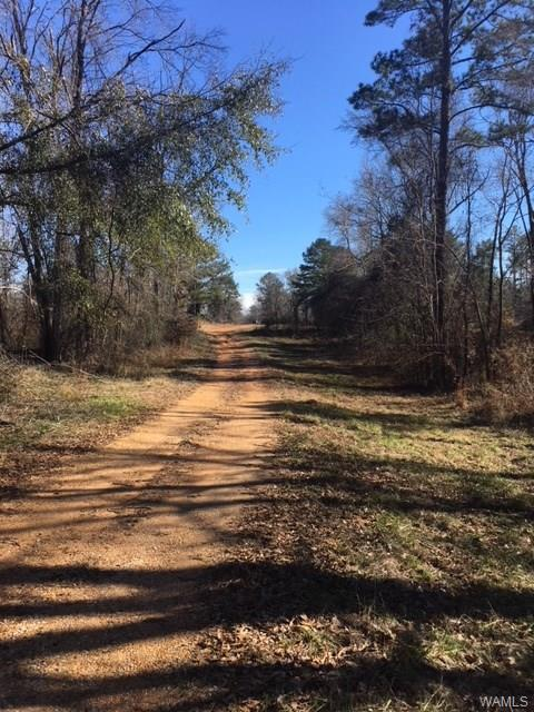 0 Bear Creek Road, TUSCALOOSA, AL 35405 (MLS #125569) :: Wes York Team